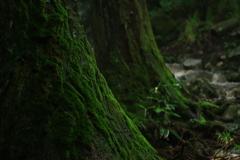 綺麗な苔と水の音