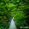 緑とつり橋