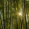 竹藪の中の光
