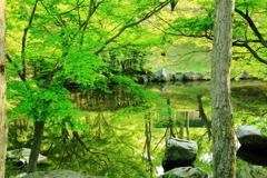 公園の緑2