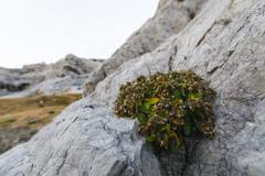 岩に囲まれて育つ花