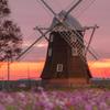 夜明けのオランダ風車