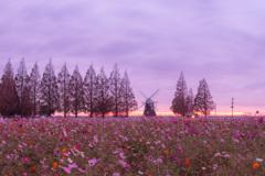 あけぼの山農業公園の夜明け