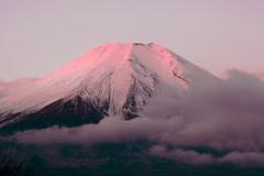 「紅富士」
