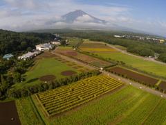 「空撮ひまわり・富士」・・・・・