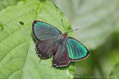 美しい蝶・・・のはずが?