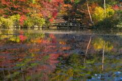 秋の長谷池