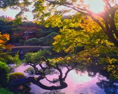 相楽園の秋彩