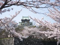 春爛漫の大阪城