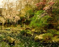 春彩の竹林院