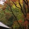 錦秋の鶏足寺