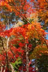 大原野神社の秋