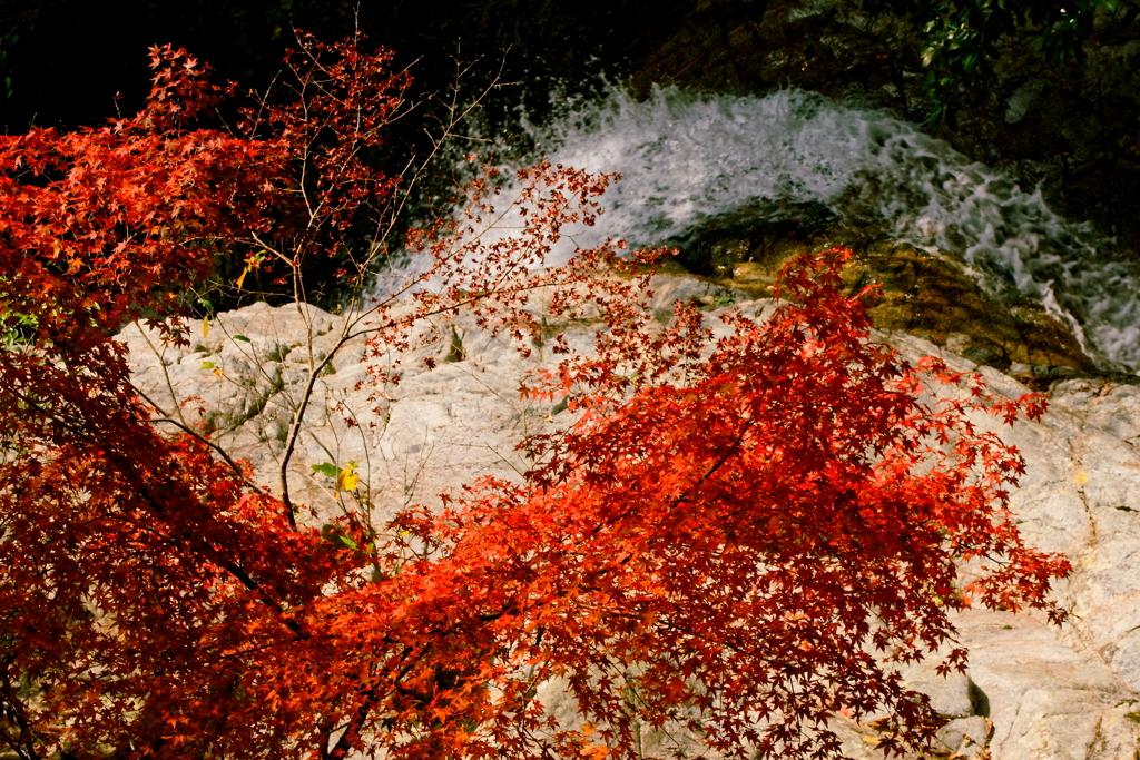布引渓流の秋彩