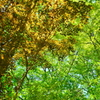 六甲山の新緑の輝き