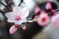 コロナ禍に廻った春