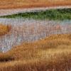 白馬栂池自然園の秋彩