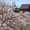 吉野に訪れた春