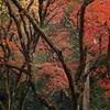 鶏足寺の秋彩
