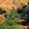 六甲山の秋色
