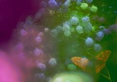 紫陽花園の白昼夢
