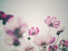 漂う秋の香り*