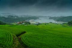 梅雨の空気感