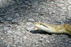 蛇の瞳に写る青空
