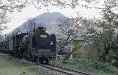 桜と蒸気機関車(煙突が繋がってる珍しいD51)