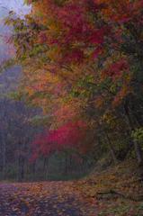 里の秋を歩いて。。。