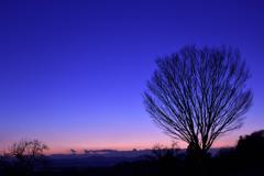 菊池平野の夕景1