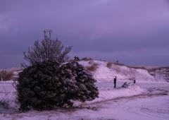 雪原にハリネズミ現る!