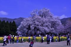 長閑(のどか)な春の日の午後