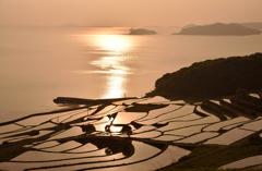 海と棚田を照らす夕日