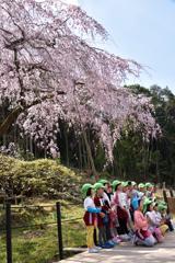 桜もニッコリ、記念撮影。