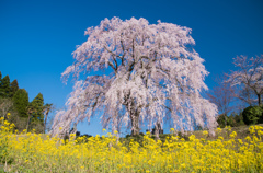 春の代名詞