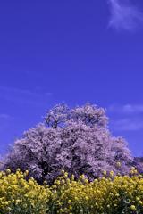 降り注ぐ春の日差し。