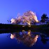 耳納山に守られてきた一本桜