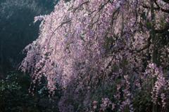 シアワセな春の日