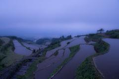 霧に浮かぶ天空の棚田