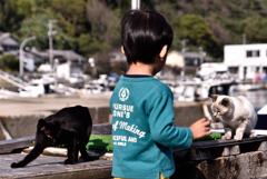 ネコたちに遊んでもらってる少年。