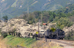 桜と蒸気機関車(昔の信号機)