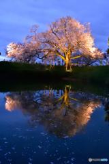 日本の絶景が見たくて。。。