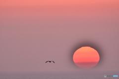肥前町に沈む夕日とカモメ