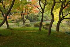 秋の京都植物園