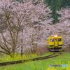 いすみ鉄道 さくらの季節①
