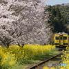 いすみ鉄道 さくらの季節④