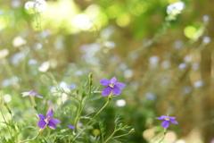 5月の庭 Ⅱ