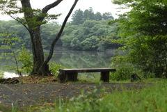 朝の散歩道~白雲の池Ⅱ