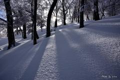 雪山の木洩れ陽