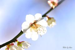かがやく春の一輪